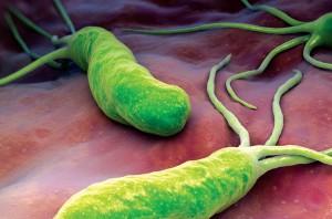 helicobacter-300x198